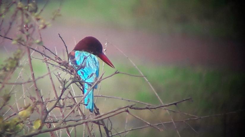 Bharatpur birds